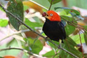 bird-with-fruit