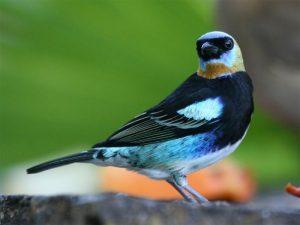 bird-looking-back