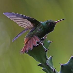 bird-takeoff